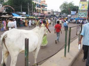 Gatuliv i Indien